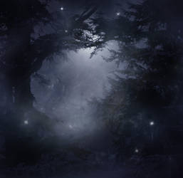 Mystical Forest Stock