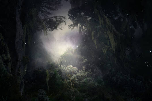 Primordial Forest Stock