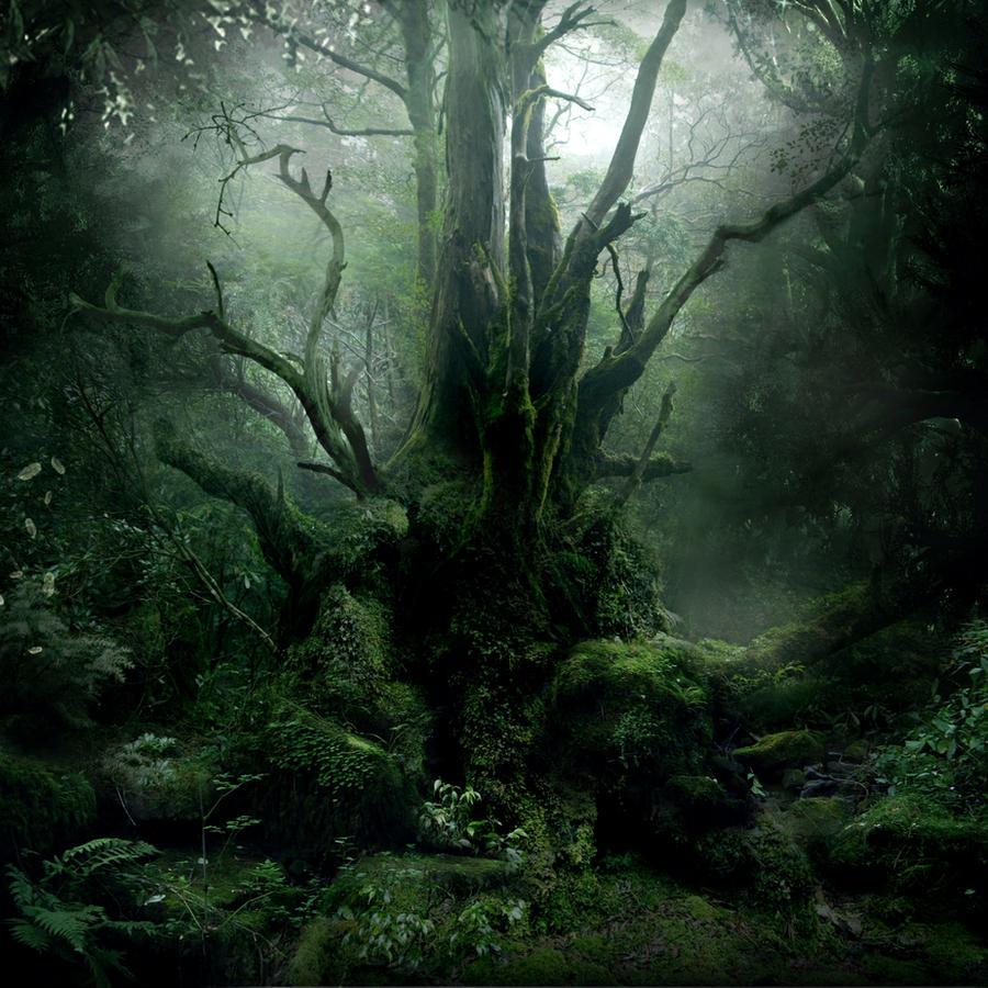 Forest Scene Stock