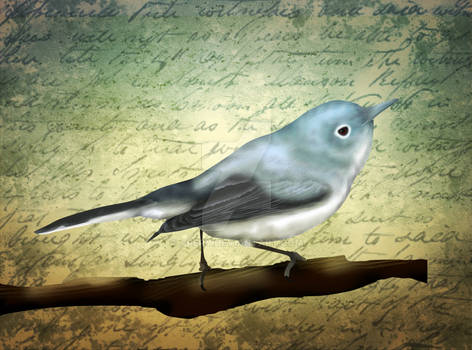 Vintage Blue-gray Gnatcathcher