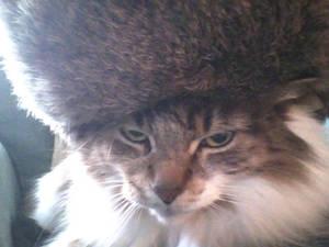 Spunky eez Russian