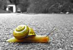 Snails away