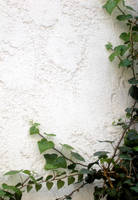 wall and ivy 1 by NaamaYMStock