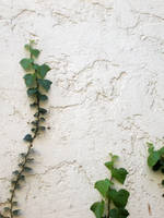 wall and ivy 2 by NaamaYMStock