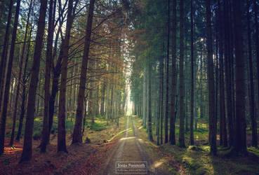 Buntwald by Cormocodran15