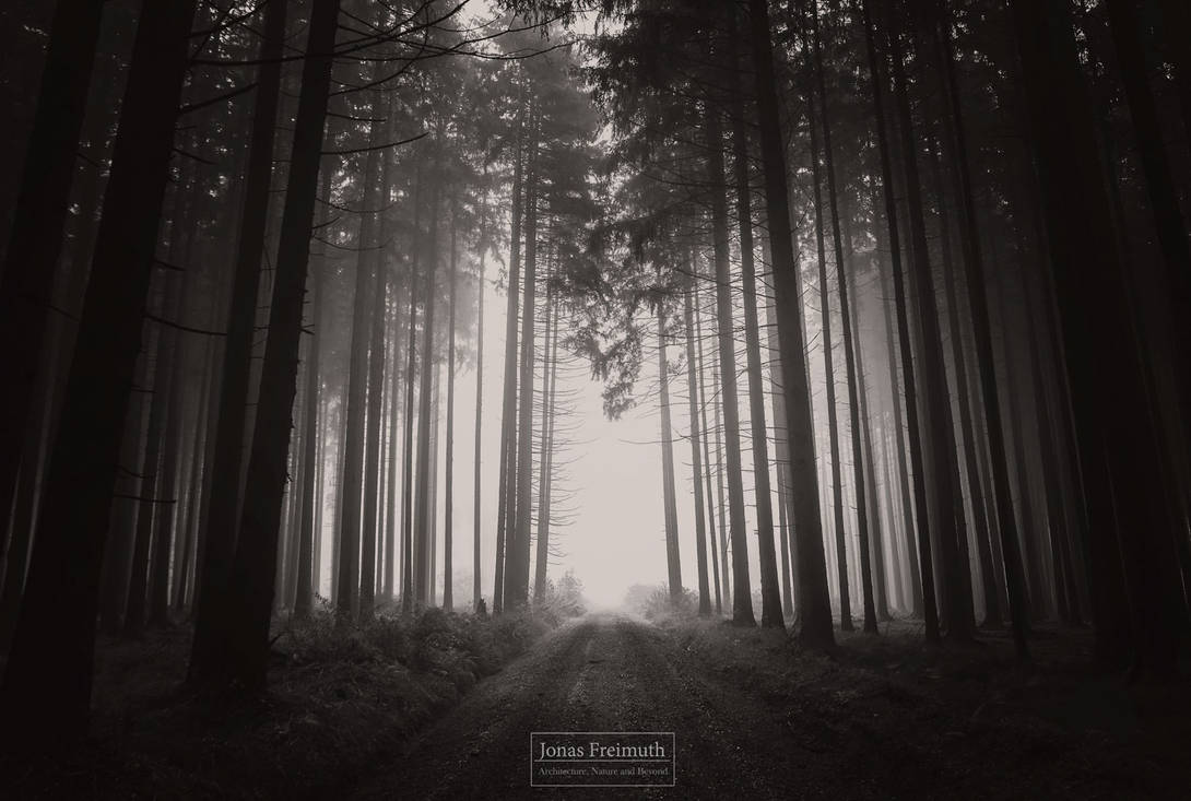 Wald by Cormocodran15