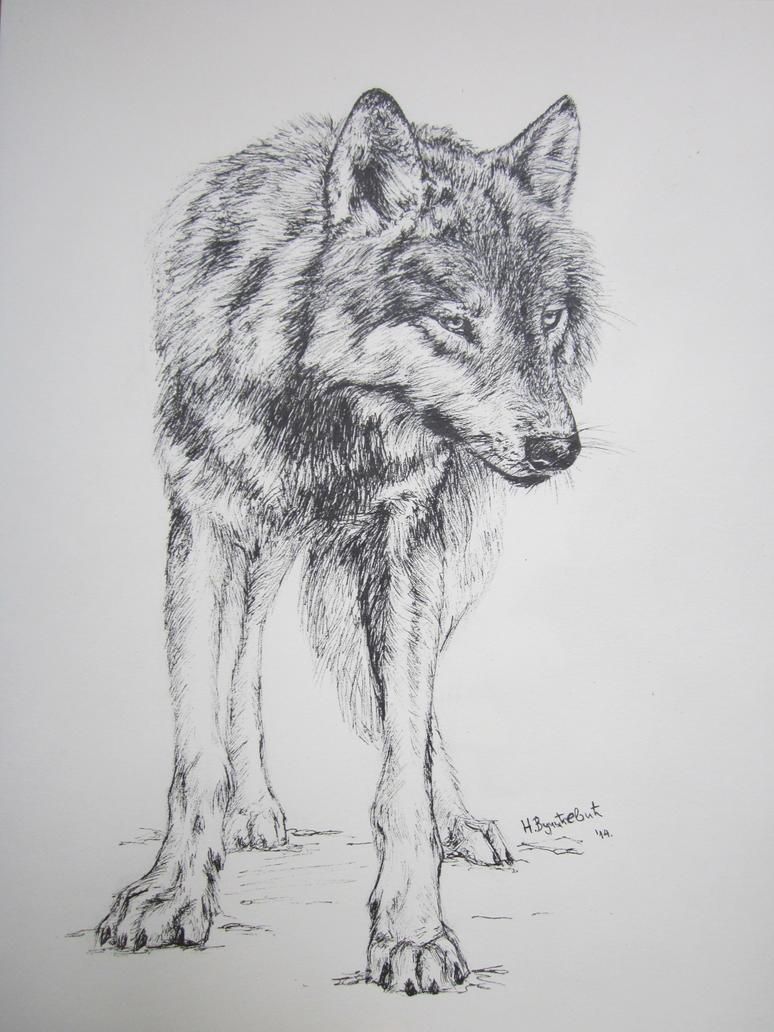 Wolf by FluffyInu