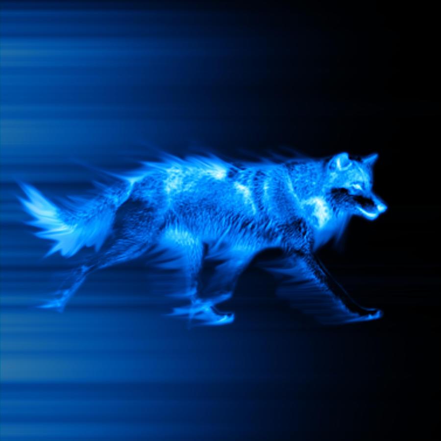blue wolf by xarcox on deviantart