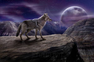 The Lone Coyote by jocarra