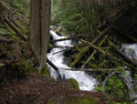 STOCK - Forest River 1