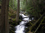 STOCK - Forest River 2