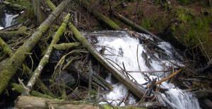 STOCK - Forest River Debris