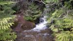 STOCK - Forest River Landing