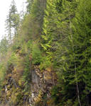 STOCK - Wooded Cliffside 4