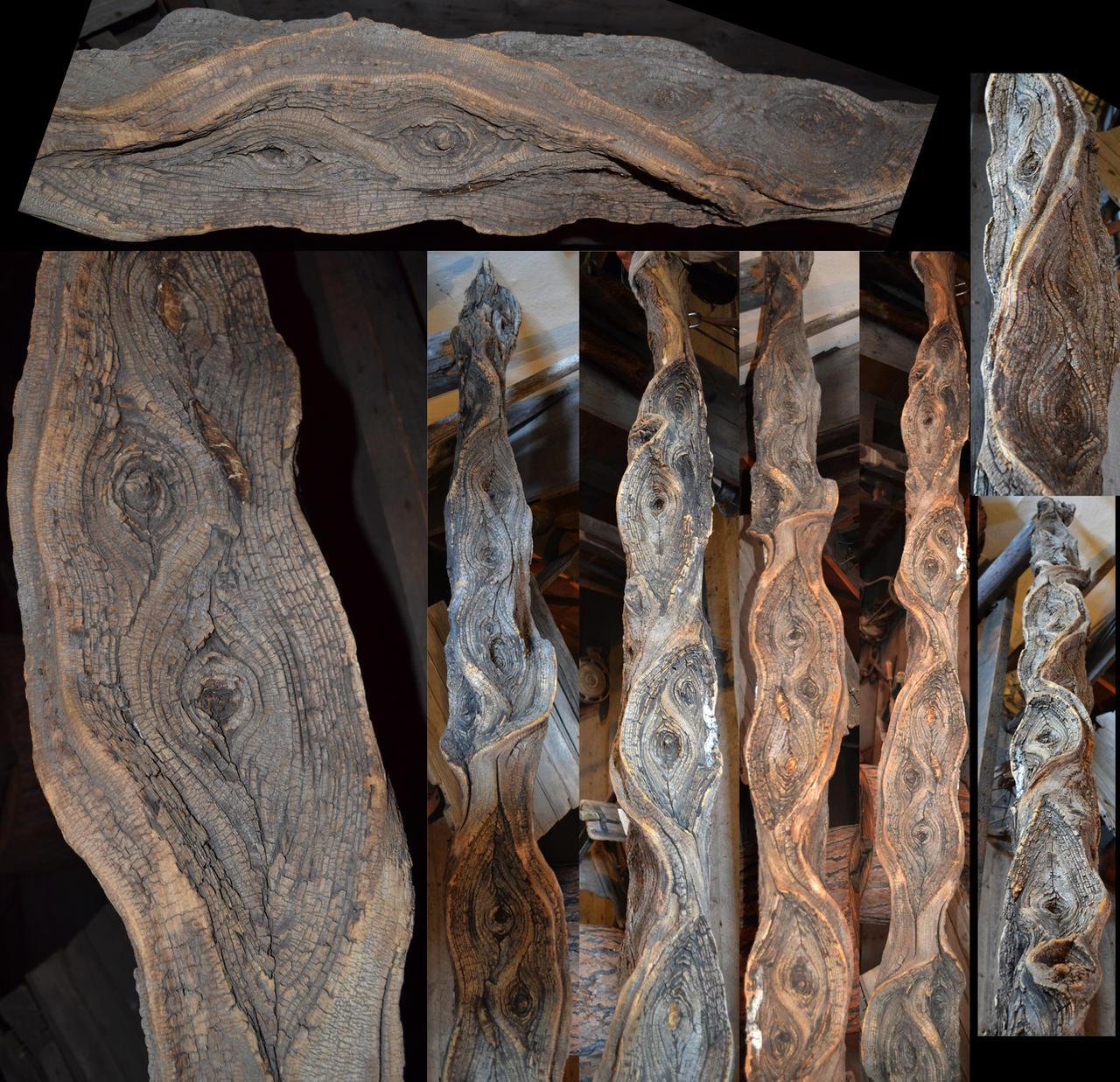 STOCK - Cool Gnarled Log 1