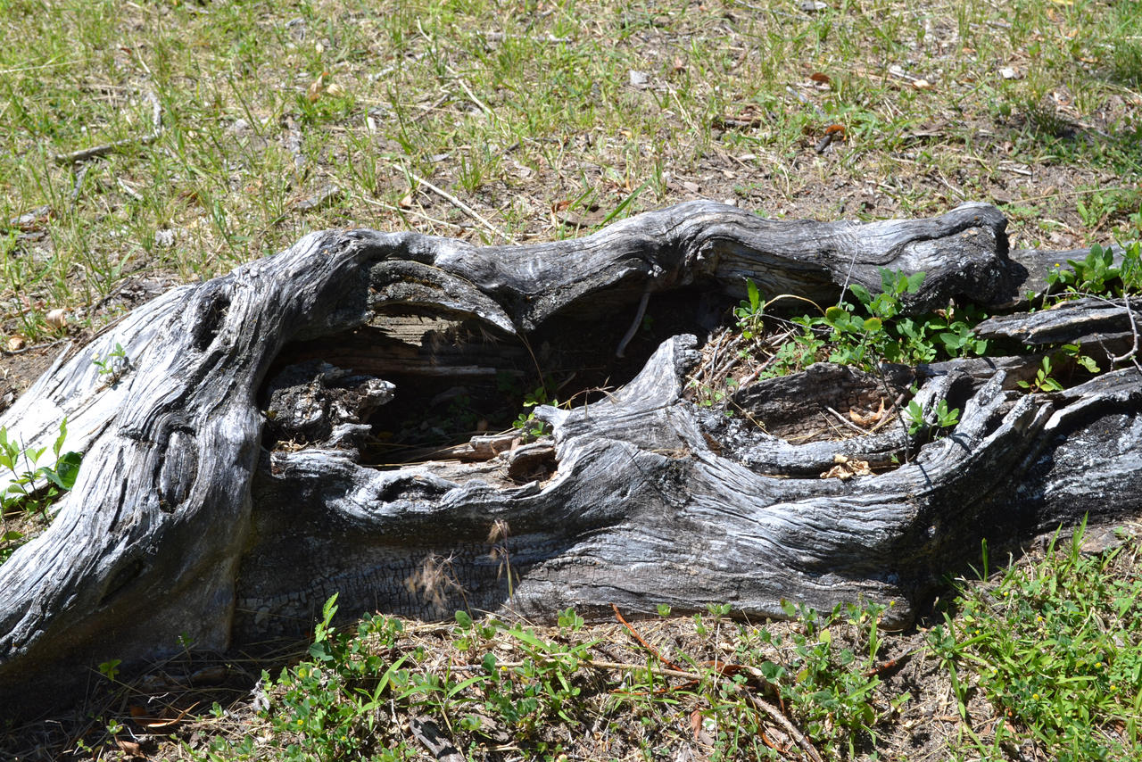 STOCK - Cool Tree Root