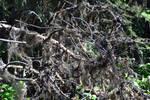 STOCK - Creepy Dead Branches 3