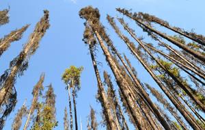 STOCK - Dead Trees Rising 1 by jocarra