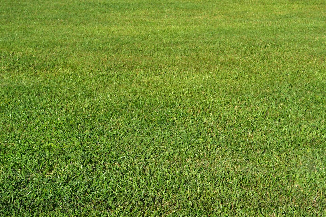 STOCK - Green Grass 1