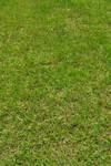STOCK - Green Grass 3
