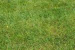 STOCK - Green Grass 6