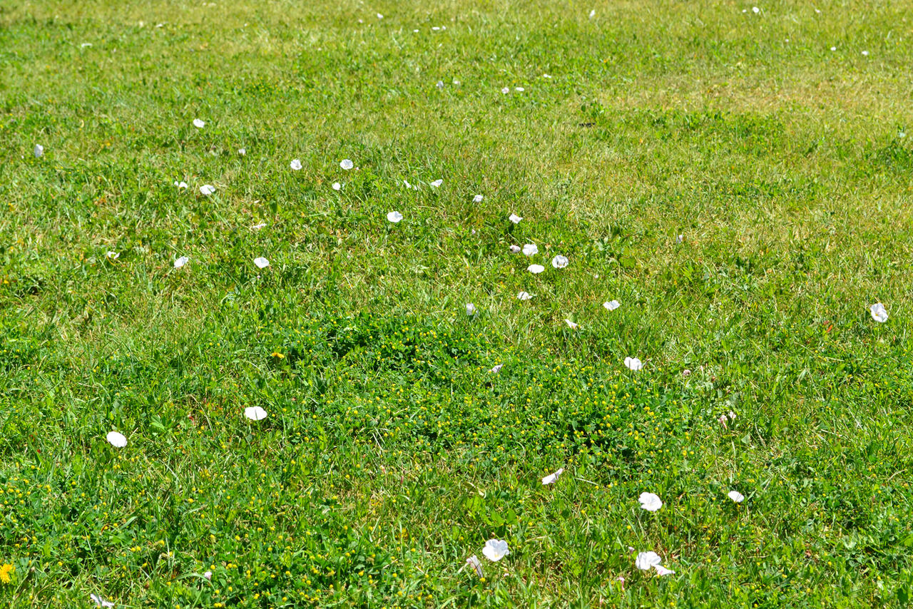 STOCK - Green Grass+Flowers 1