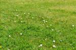 STOCK - Green Grass+Flowers 1