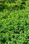 STOCK - Green Grass+Flowers 5