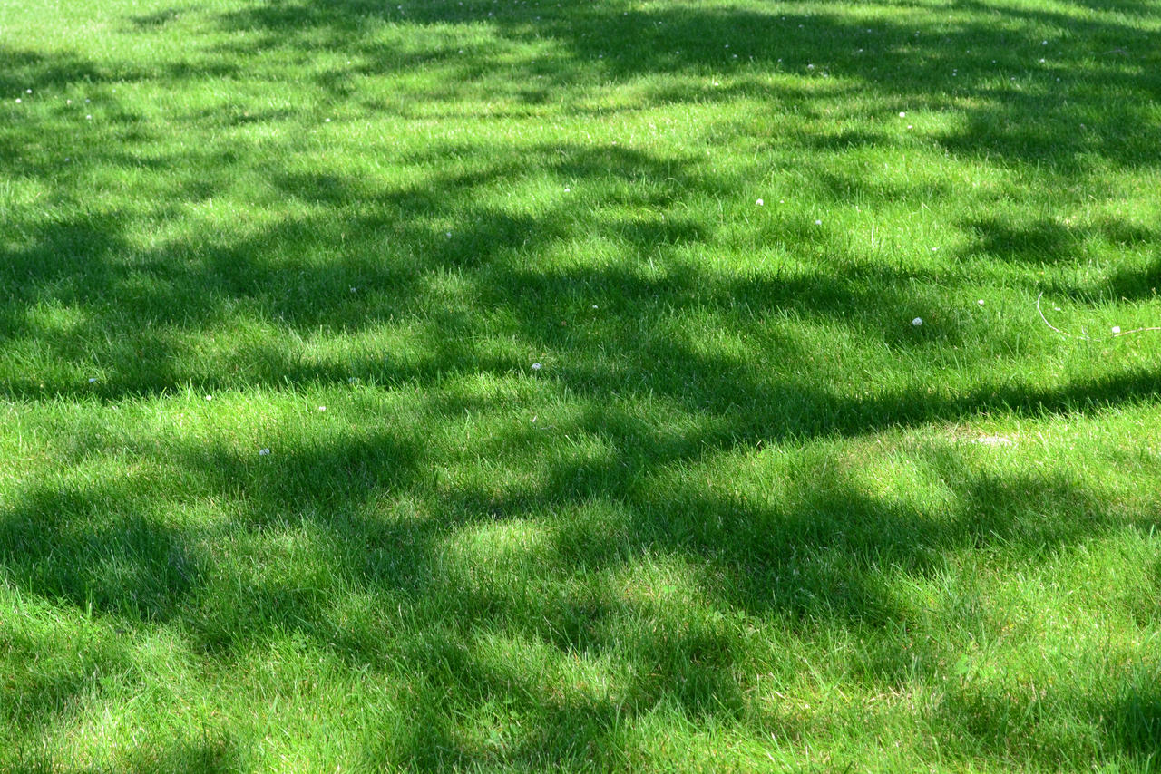 STOCK - Green Grass+Shadow 1