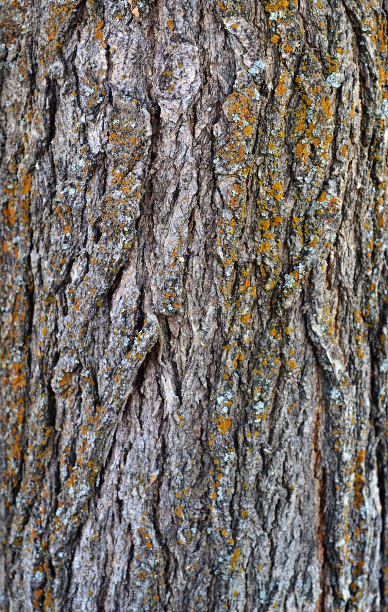 STOCK - Tree Bark 1 by jocarra