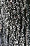 STOCK - Tree Bark 2
