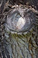 STOCK - Tree Bark 4 by jocarra