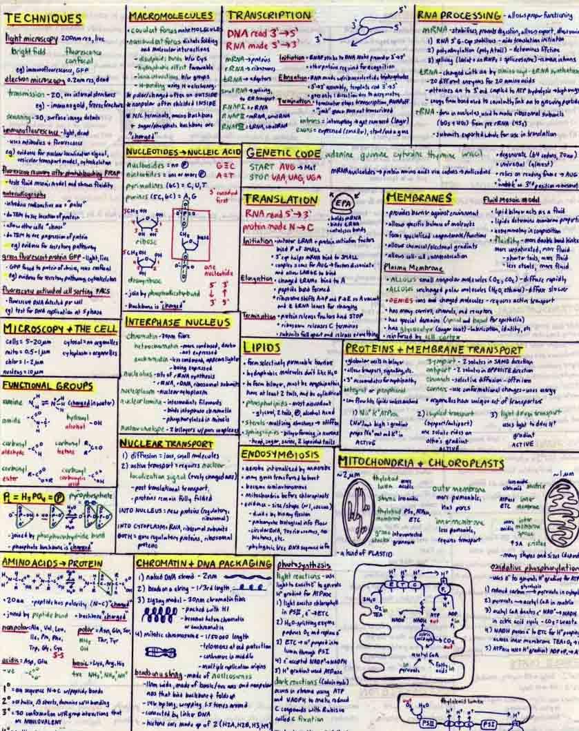 BIOL 200 Cheat Sheet 1 by jocarra on DeviantArt