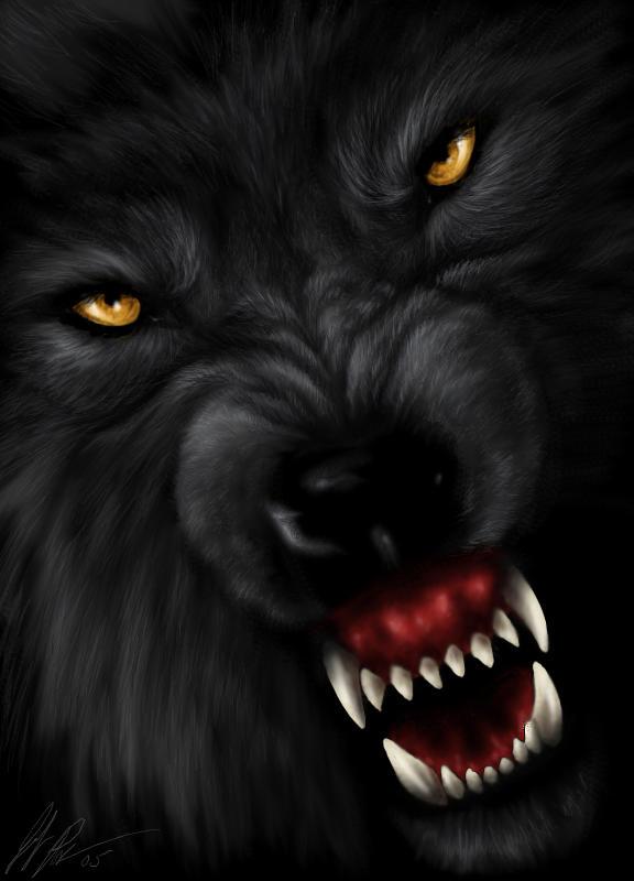 Imagenes de Lobos!!! - Taringa!