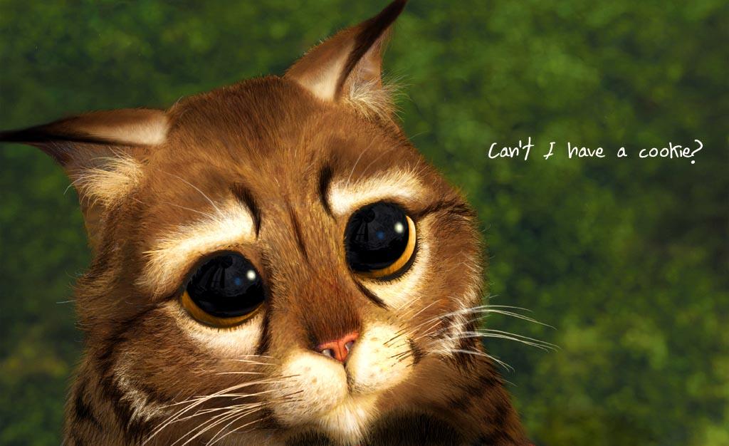 When Ash Was A Kitten By Jocarra On Deviantart