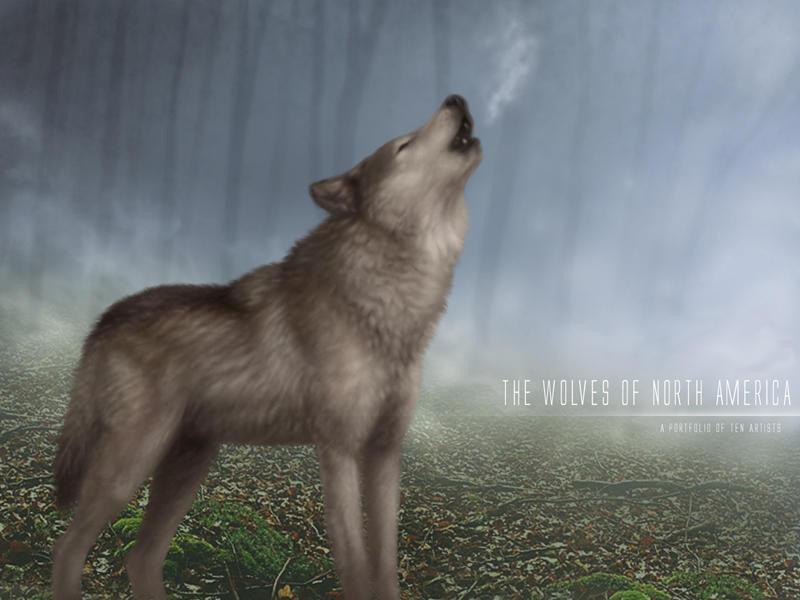 Lobo Aúllando: Dibujo De Lobo Aullando