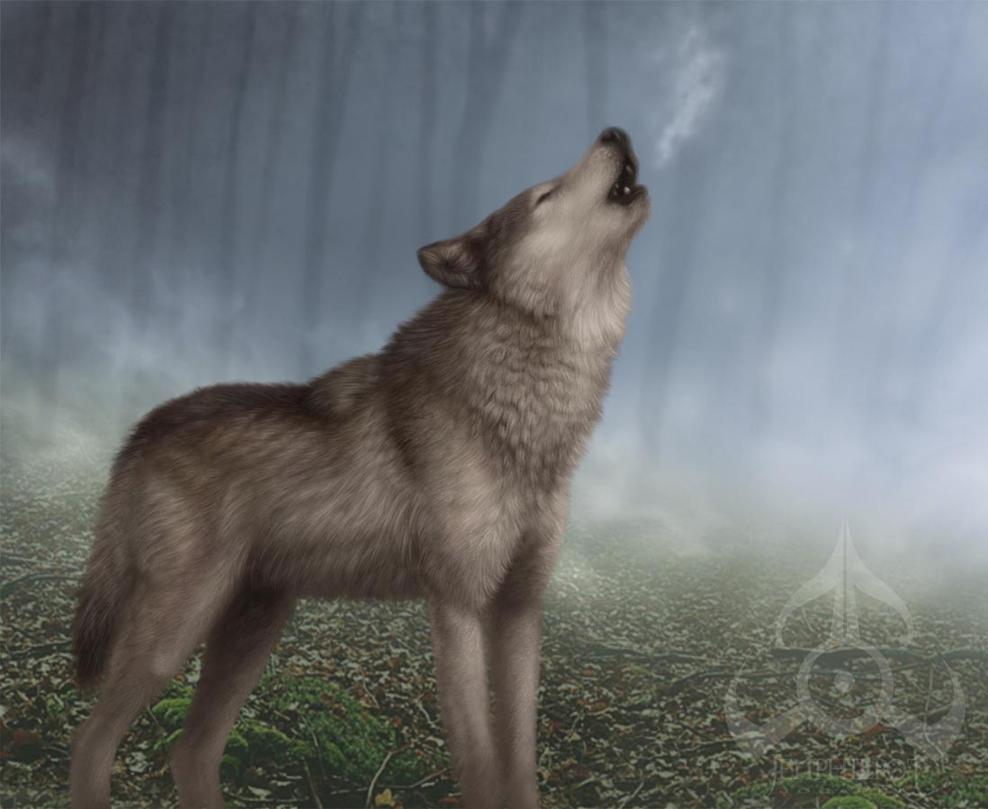 Wolfsong by jocarra