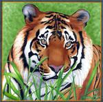 Tiger - Jungle Lord