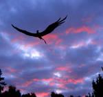 Raydl - Black Angel