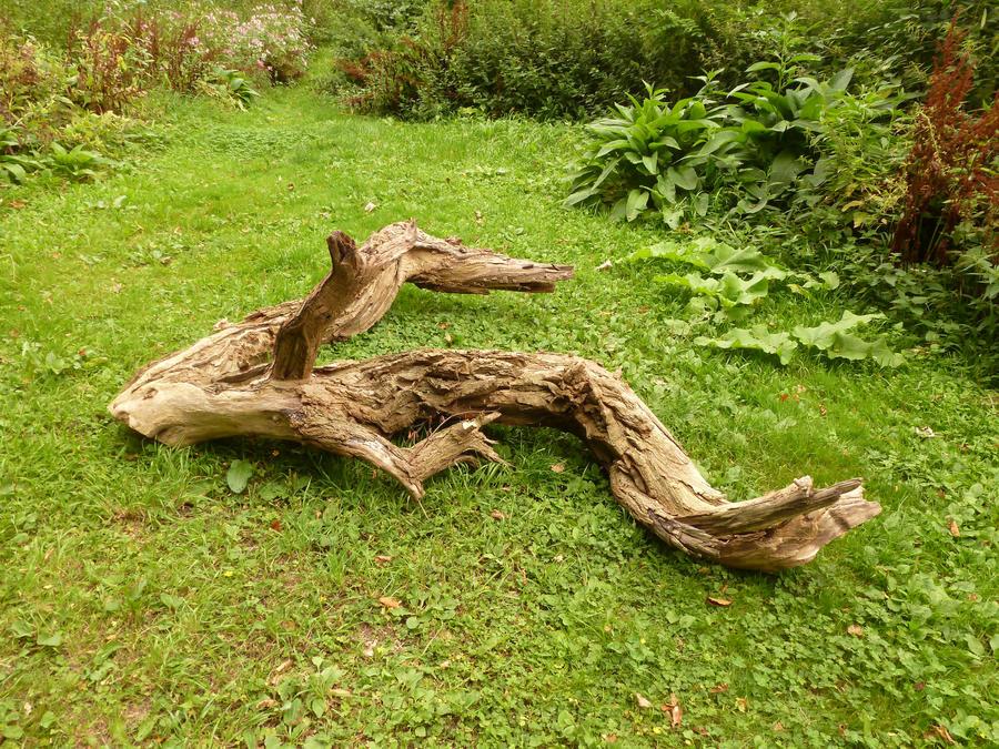dead tree 367 by gestandene