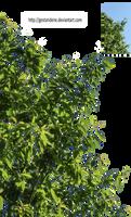 Branches-Zweige-3 by gestandene
