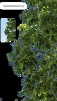 Branches-Zweige-2 by gestandene
