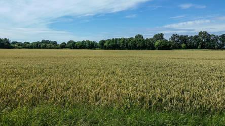 Field-160411 by gestandene