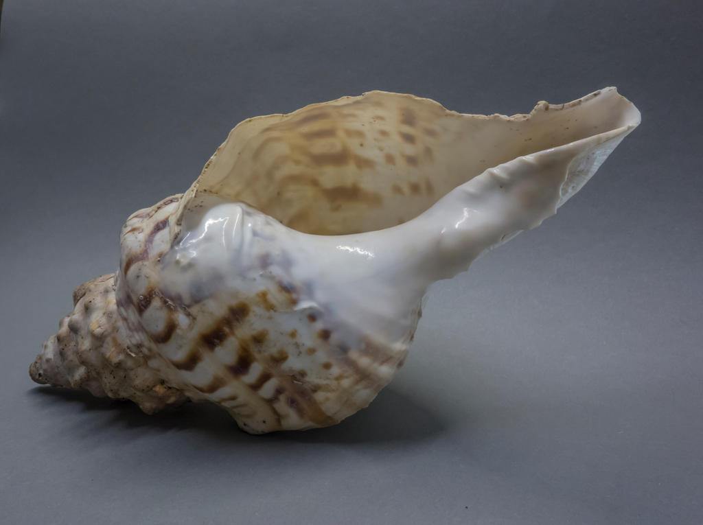 Shell-2 by gestandene