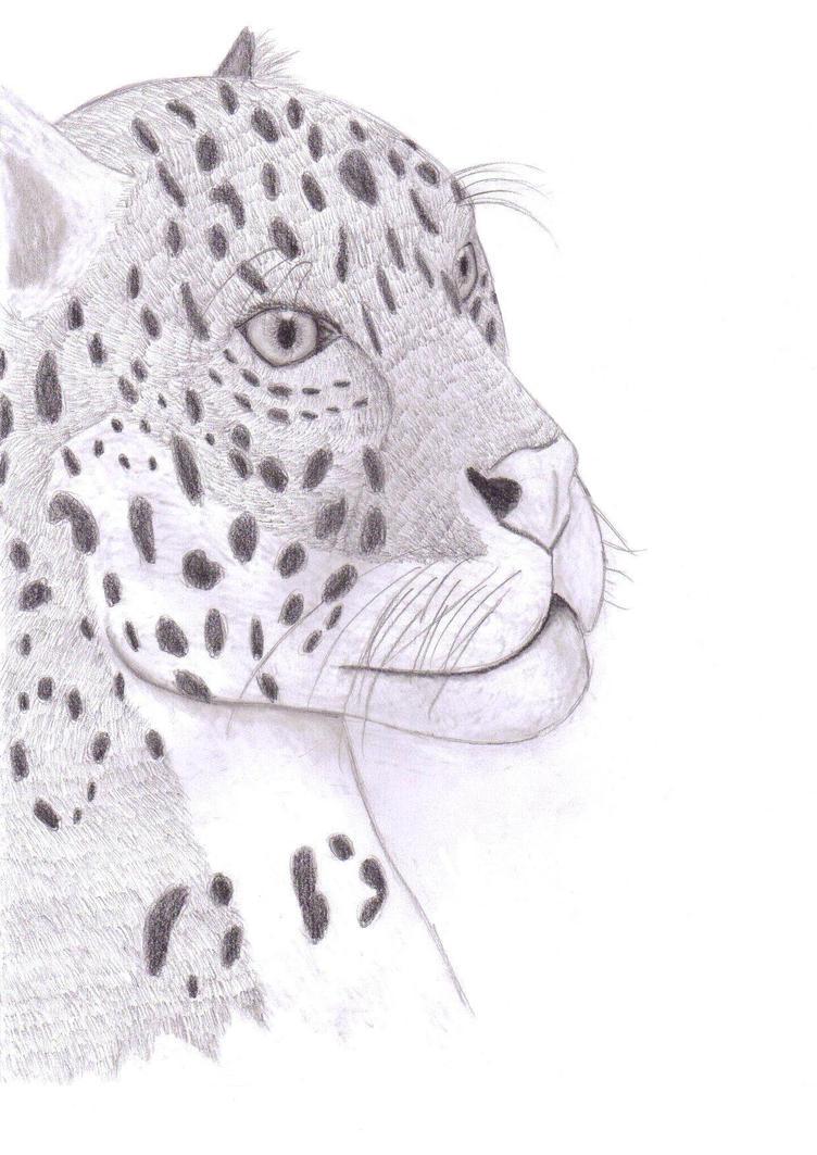 Jaguar by CyndraofShadowClan