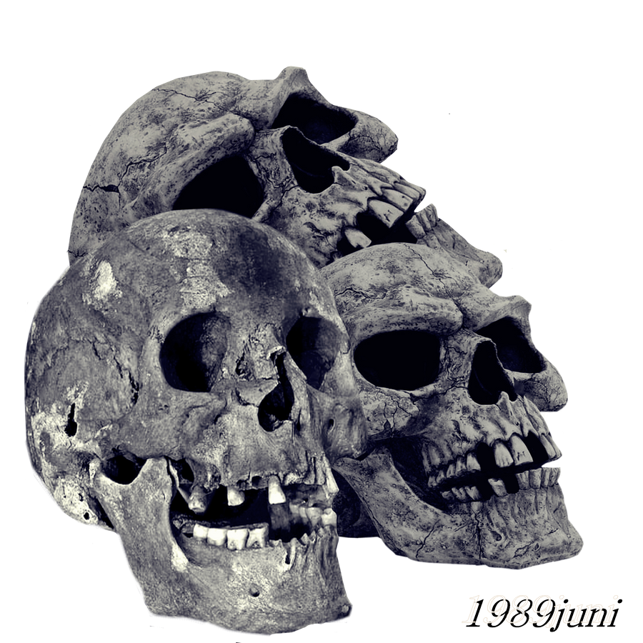 Skull Stock 1