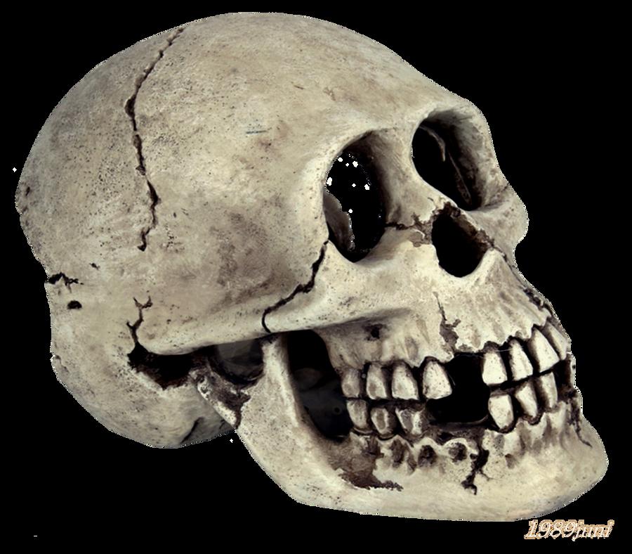 skull stock 2 by 1989juni