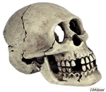 skull stock 2