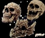 Stock Skull5