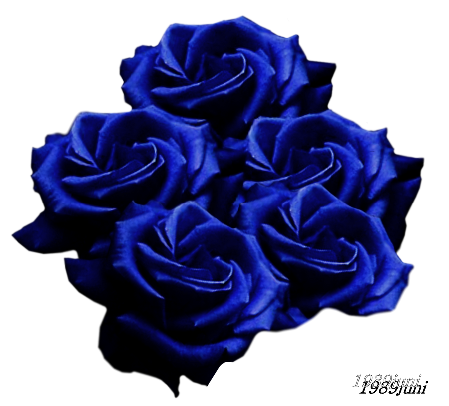 stock photo blaue rosen by 1989juni on deviantart. Black Bedroom Furniture Sets. Home Design Ideas